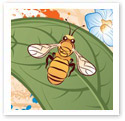 Honey Bees : Digital Illustration